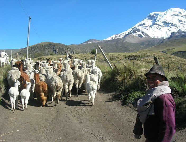 Andes Alpaca Ranch