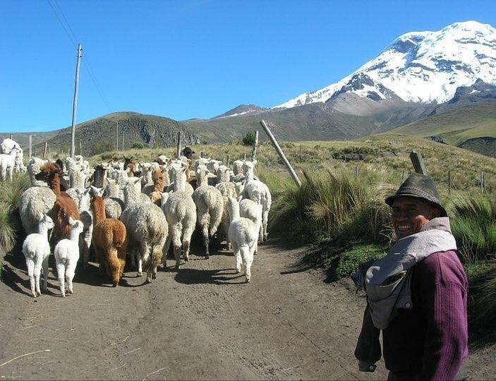 Andes Alpaca Ranch