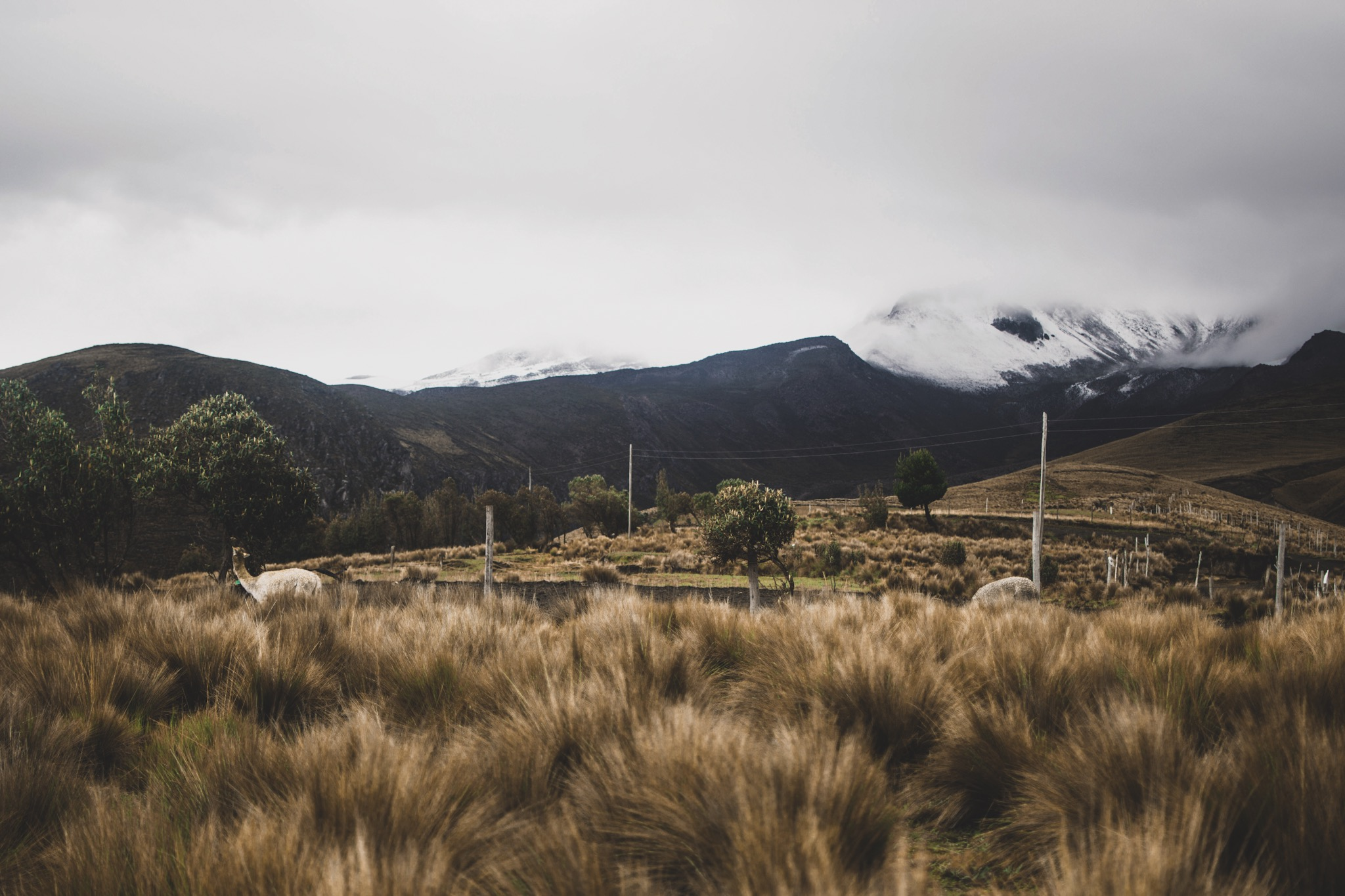Volunteer in the Andes