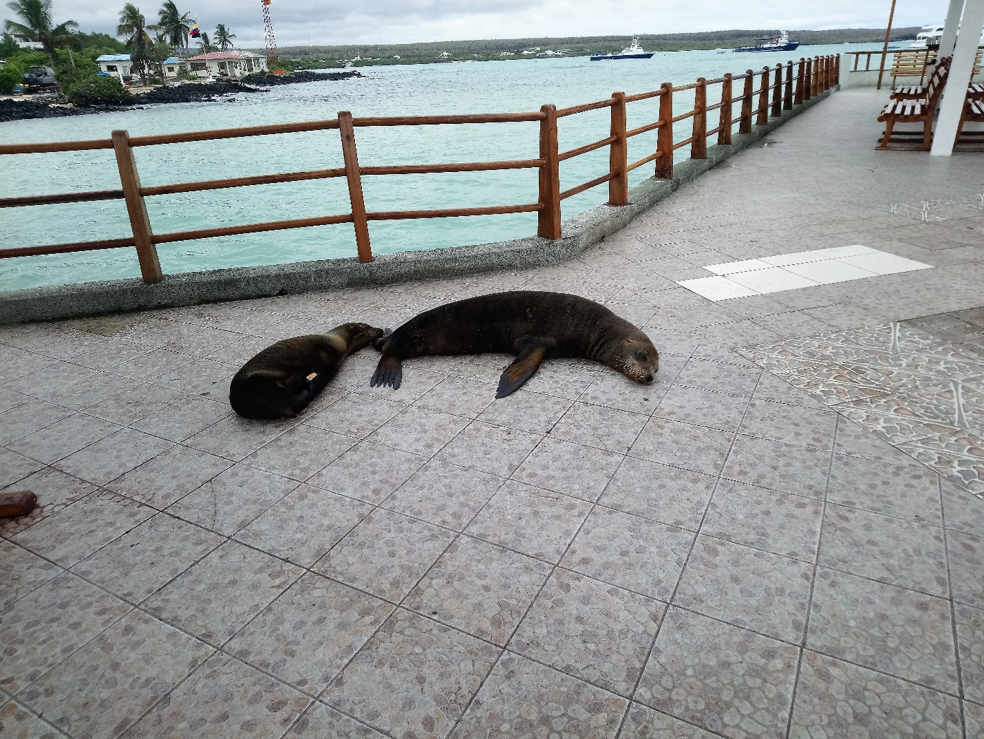 A month volunteering in the Galapagos Islands