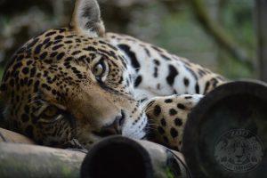 "Animal Rescue Center ""Los Jaguares"""